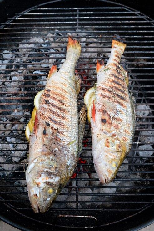 abborre-dubbel-grill