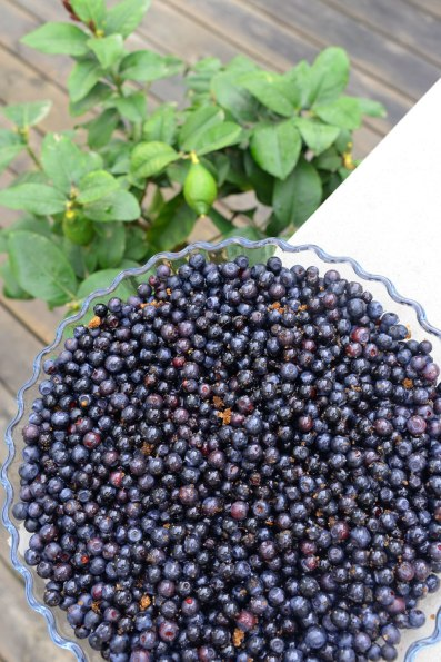 blåbärspaj