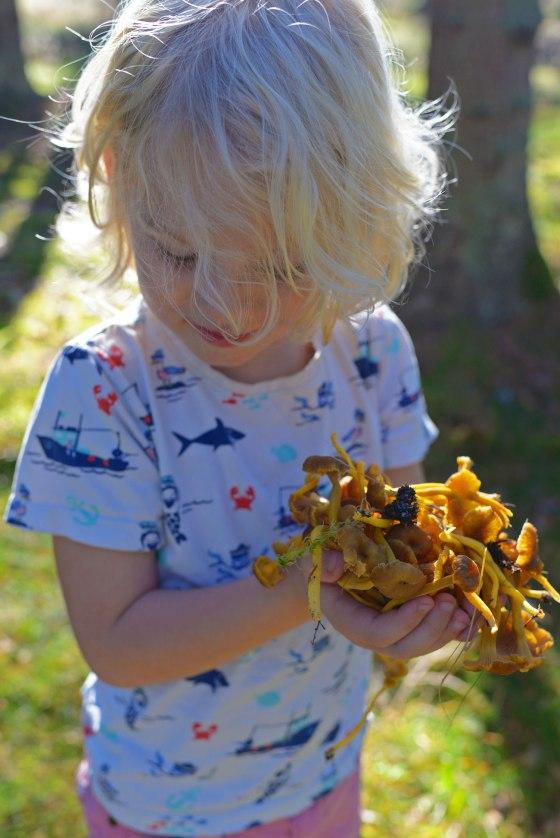 sigge-och-svamp